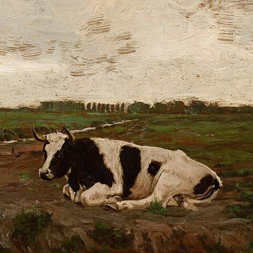 Cow Resting in Meadow