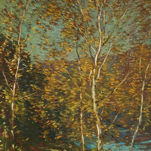 Birch Trees Beside a Lake
